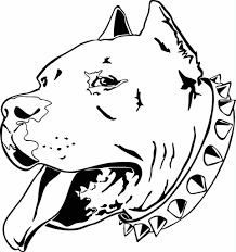 head pitbull coloring page animal ready to print pitbull