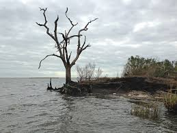 native plants of louisiana louisiana history washes away as sea levels rise land sinks wwno
