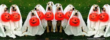howl o ween in tampa bay