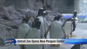 detroit zoo u0027s new penguin center now open