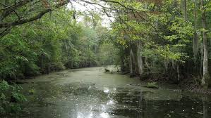 South Carolina forest images Attractions in south carolina travel blog jpg