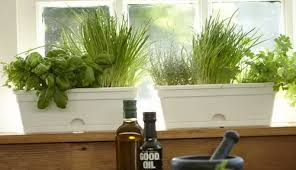 Indoor Herb Garden Kit Indoor Herb Gardening Kit Gardening Ideas
