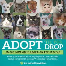 black friday pet adoption 11 20 14 the animal foundation getting a jump start on black