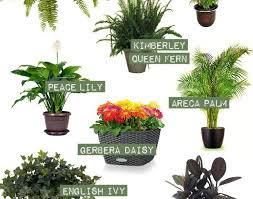 plant best indoor plants awesome ivy house plants 10 best