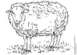 printable sheep coloring pages honningpupp ii coloring