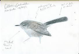 birdguy net news