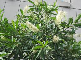 my walk with food and beautiful plants and callistemon