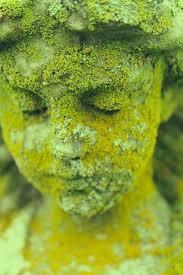 best 25 garden statues ideas on moss garden
