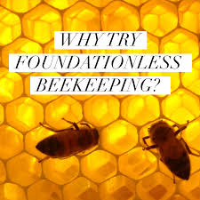 beekeeping like a why try foundationless beekeeping