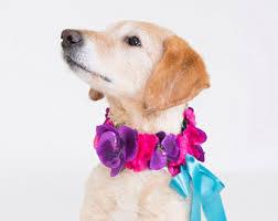 cupid dog costume etsy