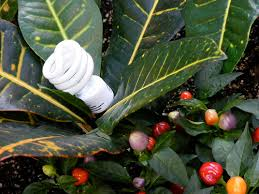 toxic light bulbs to be forced on an unsuspecting public the