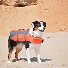 Make Bathtime Fun For Your Dog What To Do When Your Dog Hates The Water Rover Com