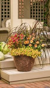 creative garden container pot combinations and ideas container