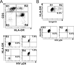 significant virus replication in langerhans cells following