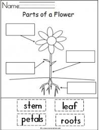 parts of plants and their functions parts of a plant botany and