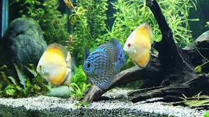 How To Clean Fish Tank Decorations How To Clean A Saltwater Fish Tank Howcast The Best How To