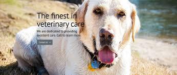 tickle blagg animal hospital veterinarian in san marcos tx usa