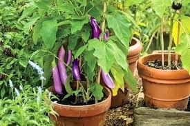 Planter Garden Ideas Planter Gardening Vegetables Saleros Club