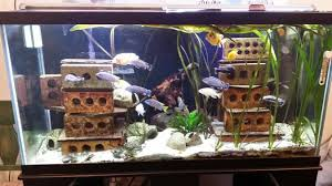 mts an evolution the planted tank forum