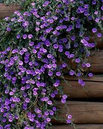 12 Best Annual Flowers For by 304 Best Rock Gardens U0026 Ground Covers Images On Pinterest