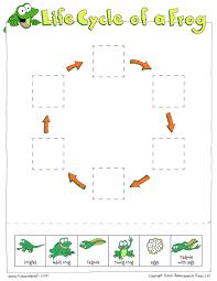 frog life cycle cut u0026 paste tim u0027s printables
