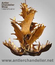 Antler Chandelier Shop Moose Antler Chandelier Ebay
