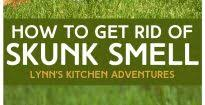 How To Get Rid Of A Skunk In Your Backyard How To Get Rid Of Raccoons Images On Appealing How Get Rid A Skunk