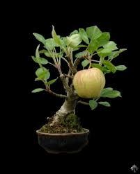 some cool bonsai trees i found album on imgur