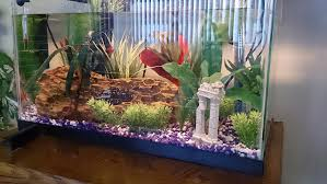 fish tank ornament ideas pictures