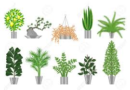 Large Indoor Plants Big And Smoll Trees House Plants Collection Large Houseplants