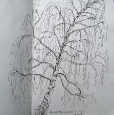 sketching an individual tree 2 birches