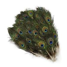 Peacock Feather Home Decor Peacock Tail W Small Eye 2 4 Inches Natural