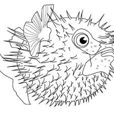 sea plants coloring pages squirrel collecting acorn coloring page download u0026 print online