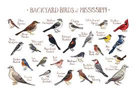 Mississippi Birds images Backyard birds of mississippi field guide art print jpg