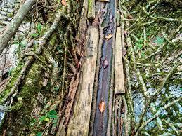 What Is Root Bridge Nongriat Meghalaya U0027s Piece De Resistance A Borrowed Backpack