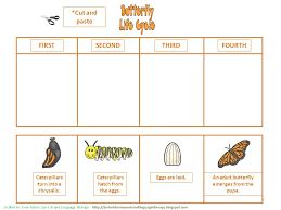 butterfly cycle worksheet worksheets