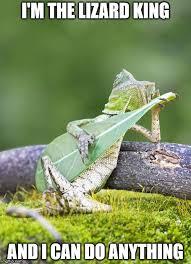 Lizard Meme - lizard imgflip