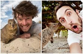 to australia s rottnest island for a selfie with quokkas