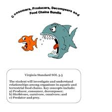 science consumers producers u0026 food chain worksheet bundle tpt