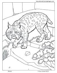 bobcat coloring cat coloring pages cat printables traveling