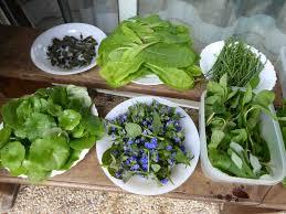 la cuisine des plantes sauvages semaine plantes sauvages comestibles du 23 au 27 avril 2018 le