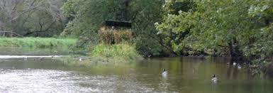 Duck Blind Images Proper Duck Decoy Placement