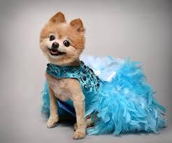 Dog Wedding Dress Dog Dress Wedding Turquoise Bling Satin Feather Harness