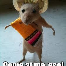 Funny Spanish Meme - picture of a funny mouse looking like a mean mexican