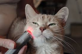 How Does Light Therapy Work Red Light Therapy Healing In Motion Bowen Therapy U0026 Animal Health