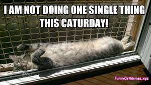 Caturday Meme - caturday meme funny cat meme