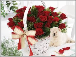 cute dog christmas wallpapers dog cute gift rose basket christmas wallpaper downloads dog hd
