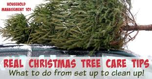 real christmas tree real christmas tree care tips from set up to clean up