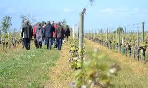 Cellier De Conquessac Salle Auguste Visites Libres En Permanence Vins Du Val De Loire