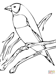 gouldian finch print coloring page animal beautiful finches